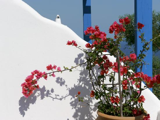 Psaravolada Resort: bougainvillea