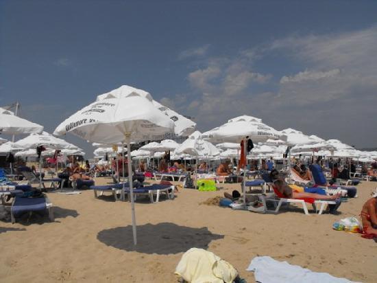 Hotel Delfin : beach