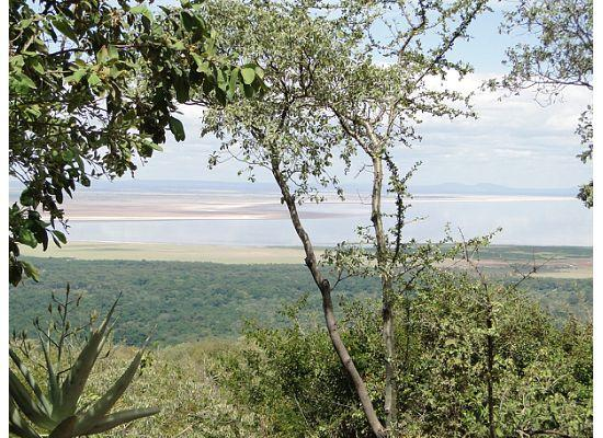 Kirurumu Manyara Lodge: View from Restaurant