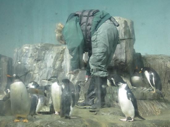 Central Park Zoo : Penguin Feeding Time