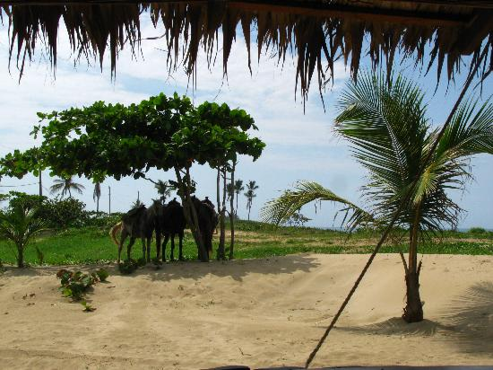 Kiosco Beach: View from a bar stool
