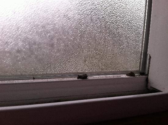 Penny Saver Inn : Windowsill Bugs