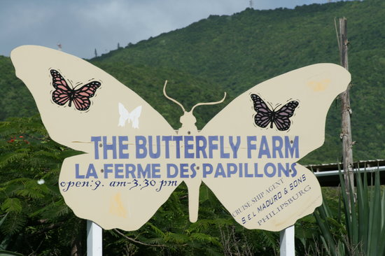 Quartier D'Orleans, St. Maarten: The Butterfly Farm is easy to find and well marked