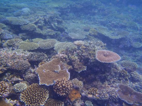 Blue Lagoon Beach Resort: BLBR Reef