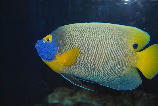 Colorful Fish Picture Of Audubon Aquarium Of The