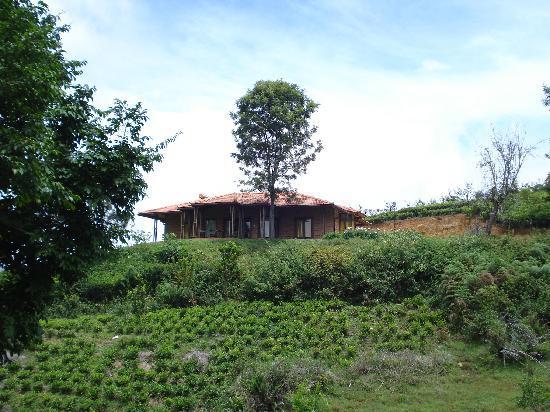 Cheddar Cottage