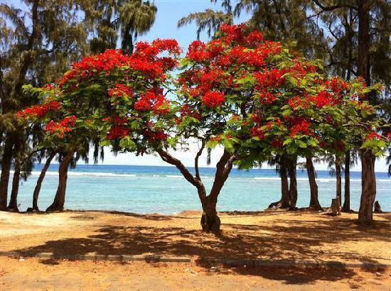 Entre-Nous Restaurant Dimitile Hotel : RESTAURANT HOTEL DIMITILE ile de La Reunion