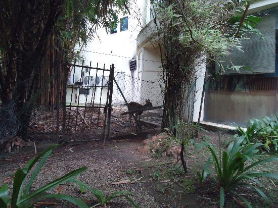 Klana Resort Seremban: the deers in the hotel