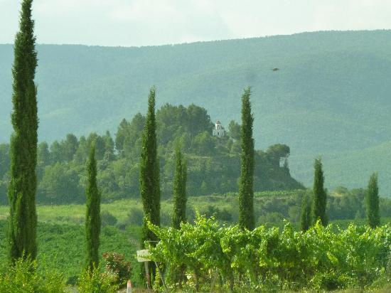 Open Guide Group: View from front of one of the vineyards