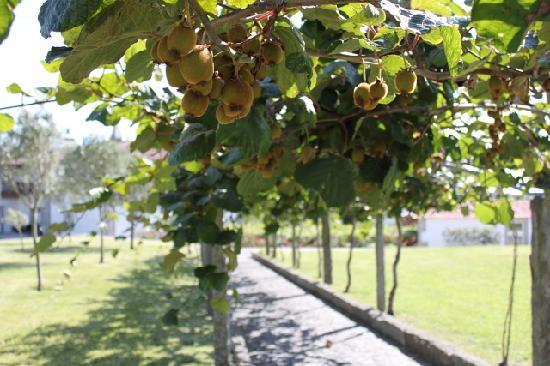 Quinta do Monteverde: kiwi