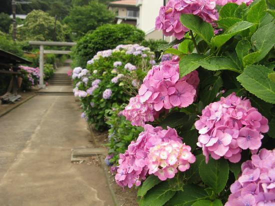 Hakusan Shrine: 神社の入り口です