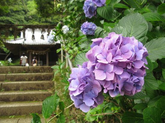 Hakusan Shrine: 境内も人が少なく、ゆったりできます。