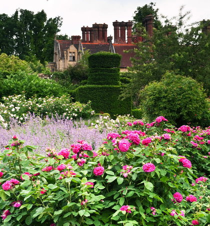 Haywards Heath, UK: Rose garden in June