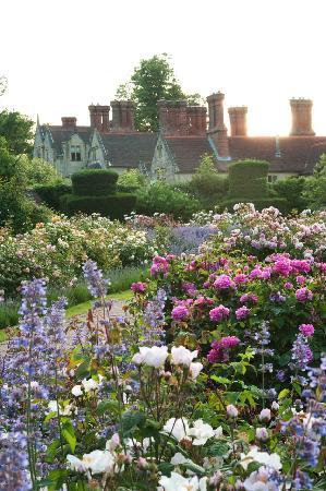 Хейуордс-Хит, UK: Rose garden at dawn