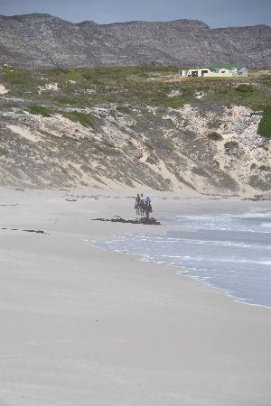 Horse Riding Grootbos Private Nature Reserve: Strand