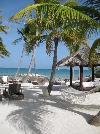 Sanctuary Cap Cana by Playa Hotels & Resorts : white sand beach