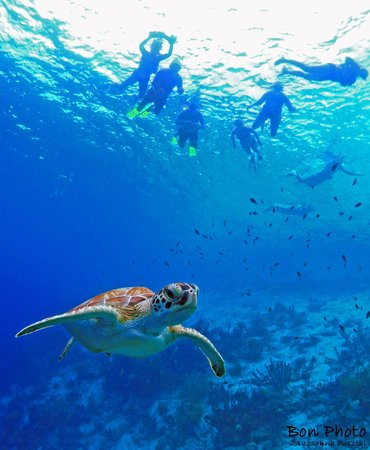 BonPhoto : Connect with Bonaire's Marine life