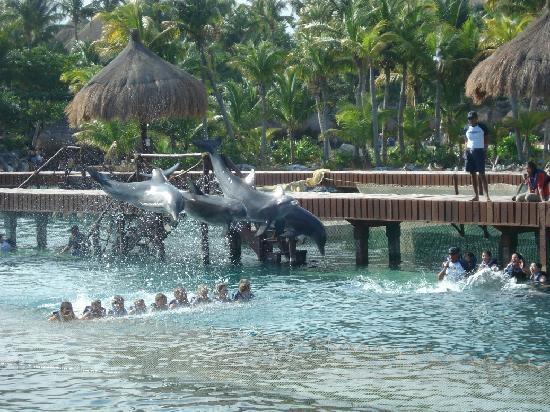 xcaret eco theme park bagno con i delfini