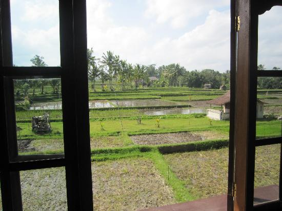 Foto de Sawah Sunrise Bed & Breakfast