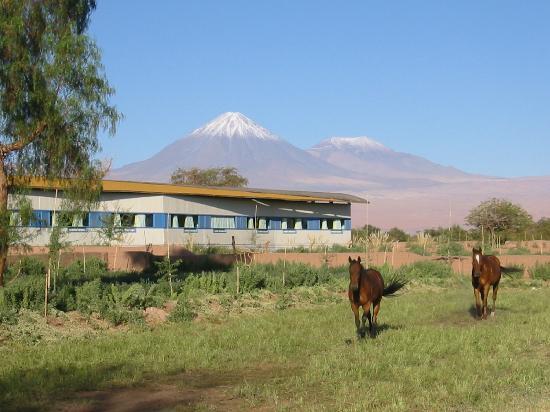explora Atacama: Alfalfa Fields
