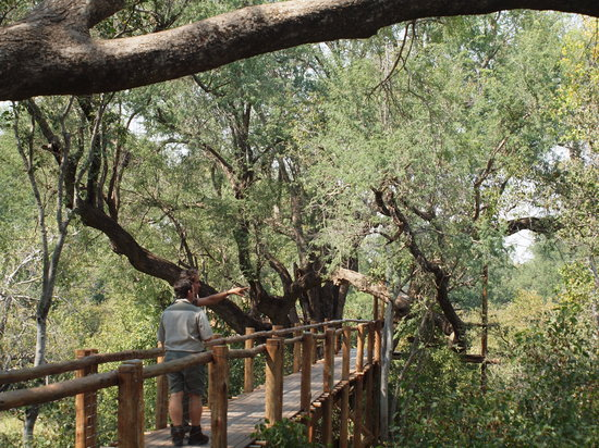 Limpopo Province, Güney Afrika: tree top walk