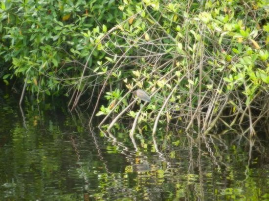 Graeme Hall Swamp