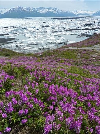 Knik Glacier Tours: sweat peas and ice