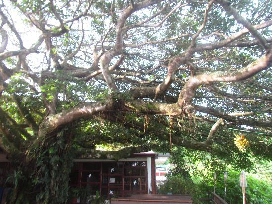 Adventure Park and Hotel Vista Golfo: Cool tree in the main area