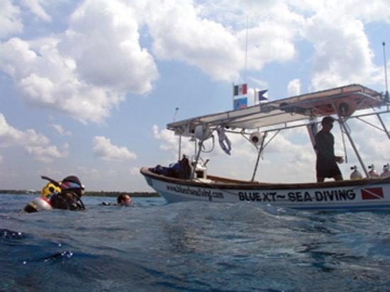 Blue XT Sea Diving: Pedro- Blue XT Sea DM
