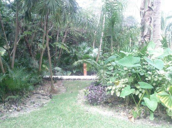 Hotel Barcelo Maya Beach : jardines