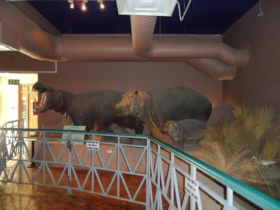 The National Museum : Some big displays