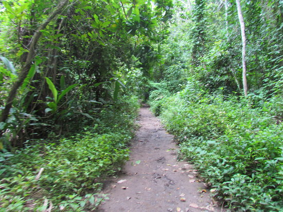 Carara, Costa Rica: main trail