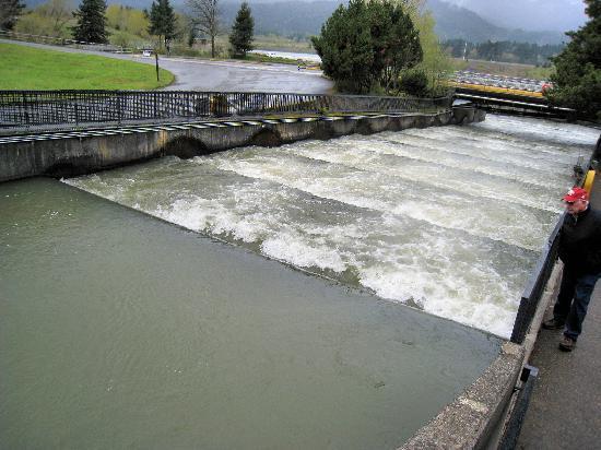 Tour Guide Bonneville Dam