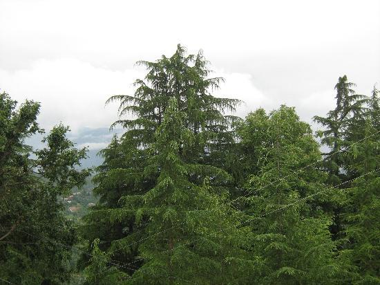 Kmvn Tourist Rest House Mukteshwar : view from room