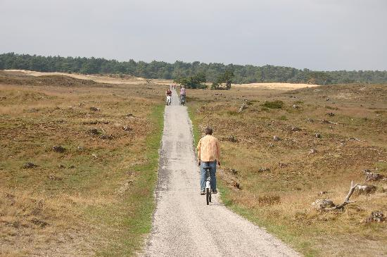 Kröller-Müller-Museum: Biking in the national park