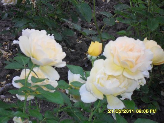 .Com Hotel : Country Rose ...