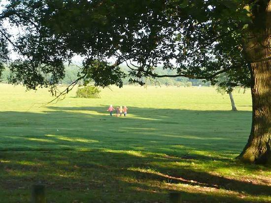 Брокенхерст, UK: boys playing in the open field next to campsite