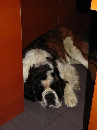 Tho hotel dog at Roca Blanca