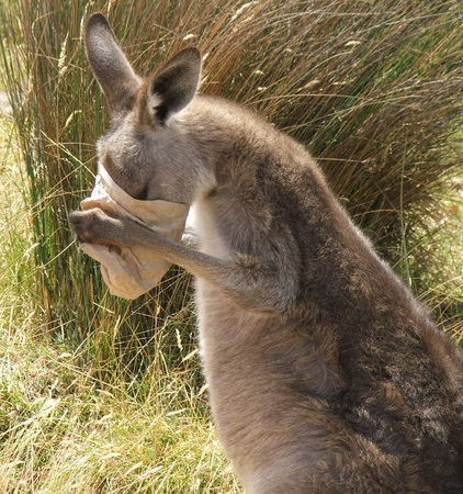 Mansfield Zoo: Kangaroo made off with some of the food
