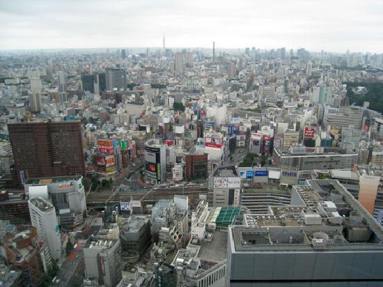 Seiji Togo Memorial Sompo Japan Nippponkoa Museum of Art: 42階からの眺め