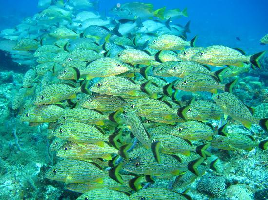 Blue Bubble Divers: Lots of fish