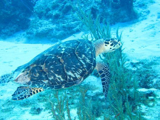 Purple Vase Sponge On Healthy Reefs Picture Of Blue Bubble Divers