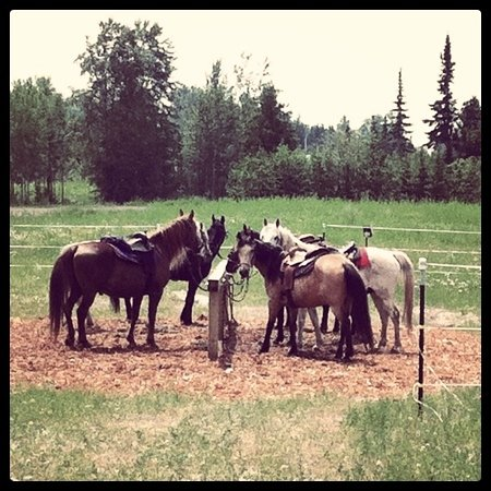 Sawtooth Mountain Stables: the horses
