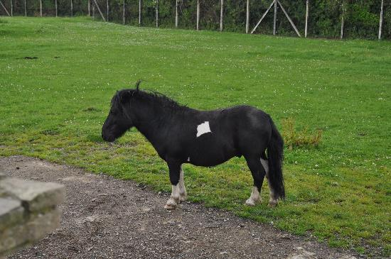 Tannaghmore Farm and Gardens: little horse