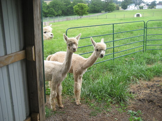 Columbia Creek Farm (Alpaca Select Group)