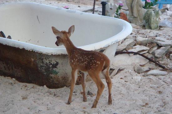Deer Run Bed & Breakfast: Now tell me that baby deer isn't cute! :-)