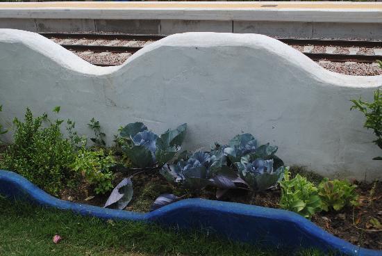 Caserio Ananda: El jardin de hierbas...que rico!