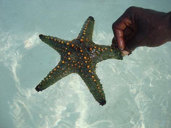 Neptune Pwani Beach Resort & Spa: Solche Schätze gibt es im Meer