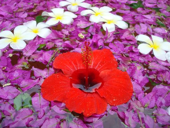 Neptune Pwani Beach Resort & Spa : Blumenschmuck