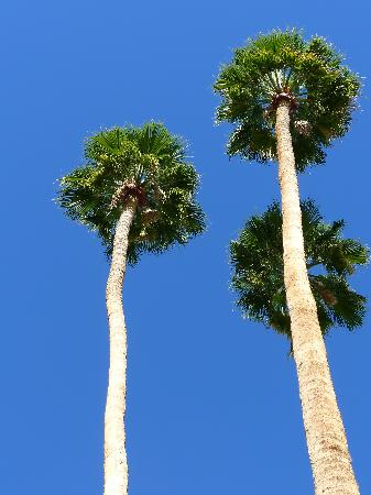 INNdulge: Towering palm trees